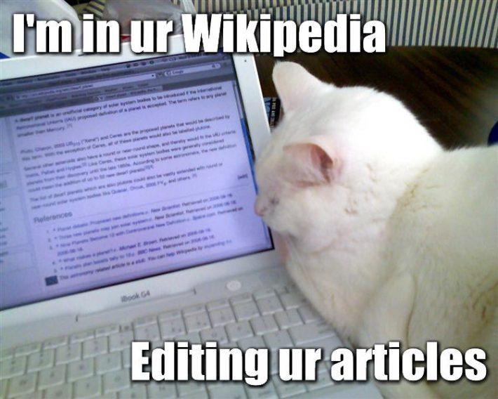 Cat meme conversation
